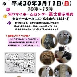 富士市で猫の譲渡会開催します