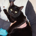 小屋から出してあげたい!かわいい黒猫めいちゃん