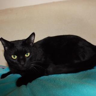 小屋から出してあげたい!かわいい黒猫むう君
