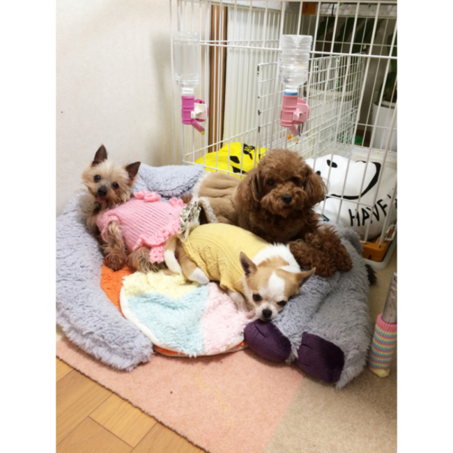 FairSupportTeam forわんDogのカバー写真