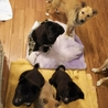 ご飯が欲しくて待ち構える子犬達。食いしん坊だから鳴いて催促!