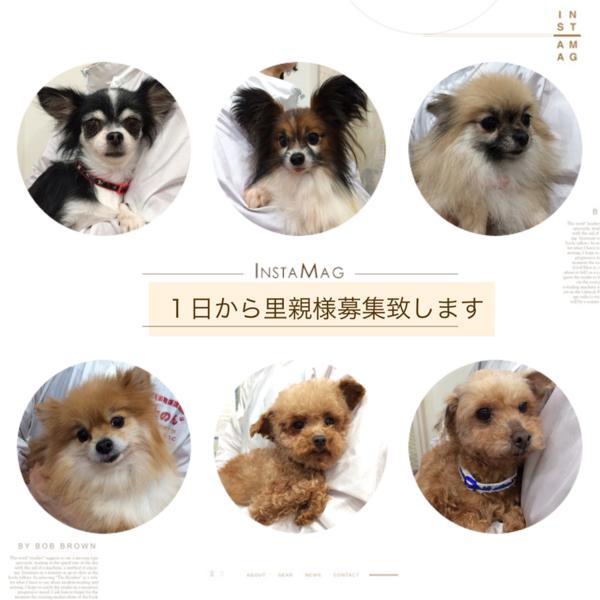 「非営利動物保護団体ととの...」(非営利動物保護団体ととのんのイベント #2687)