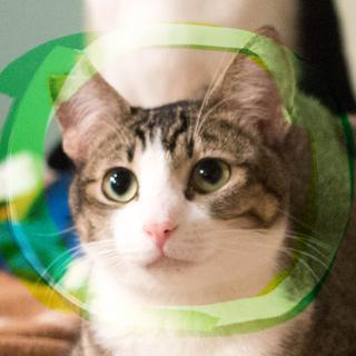 猫初心者向け手袋&靴下キジ白♡緑の瞳ネロ9ヶ月