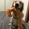 再度大型犬の里親を募集しております。 サムネイル3