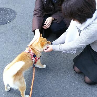 忍(シノ)ちゃんの写真