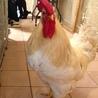 陽なたぼっこ好きな鳥男 サムネイル2