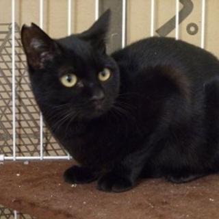 とても性格のいい甘えたな黒猫!