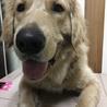 再度大型犬の里親を募集しております。 サムネイル5