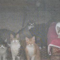 緊急SOS!!【多頭崩壊42匹の猫達】