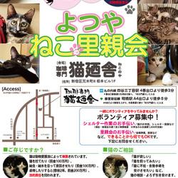 2月10日(土) 地域猫から社会猫へ FIPフリー 四谷猫廼舎 里親会(ボランティア募集中)