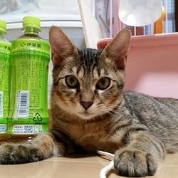 2月16日(金) 地域猫から社会猫へ 四谷猫廼舎 ナイター 里親会(ボランティア募集中) サムネイル3