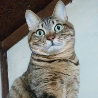 僕はマルツー☆グリーンの瞳が綺麗な3歳
