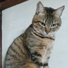 僕はマルツー☆グリーンの瞳が綺麗な3歳 サムネイル2
