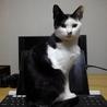 【里親募集】白と黒の子猫です。