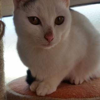 白黒の可愛い仔猫(雌)さんです。