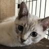 生後4か月の兄弟子猫の里親さん募集!
