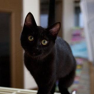 緑目の黒猫。しっぽ長