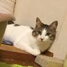 遊ぶの大好き保護猫の兄妹☆1匹から☆避妊去勢済 サムネイル2