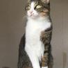 遊ぶの大好き保護猫の兄妹☆1匹から☆避妊去勢済 サムネイル3