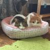遊ぶの大好き保護猫の兄妹☆1匹から☆避妊去勢済 サムネイル4