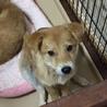 3~4ヶ月子犬 (素直な甘えん坊)♪