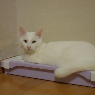 ビビリだけど優しい白猫の王子様