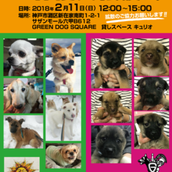 GREEN DOG SUQARE 譲渡会