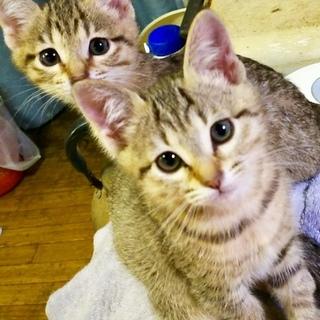 可愛い!4匹のネコちゃん!