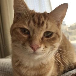 何回もくしゃみをします。猫風邪でしょうか?