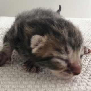 子猫4匹 2月10日産まれ