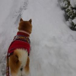 わぁースゴい雪w(゜o゜)w