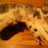 飼い猫➡捨てれる➡保護➡出産➡現在募集中❤