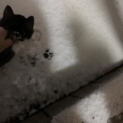 初めての雪に足跡stamp‼︎!