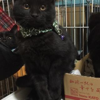 黒猫兄妹です♪