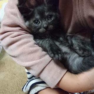 3ヶ月の子猫です。大切にしてくださる方募集します。