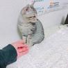 生後1ヶ月のやんちゃなオス猫です。 サムネイル2