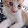 大人しいオス猫ちゃん サムネイル2