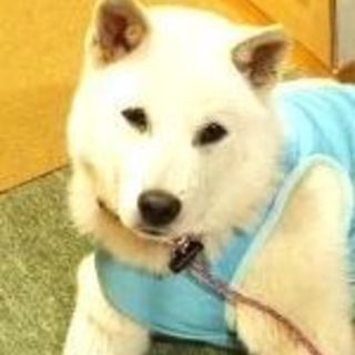 ◆大きくなりそうな子犬◆