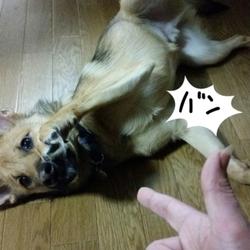 「(仮名)もんくん バン!」サムネイル1