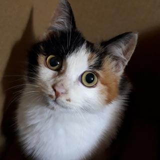 人懐っこい三毛猫ちゃんです