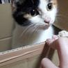 人懐っこい三毛猫ちゃんです サムネイル2