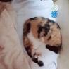 人懐っこい三毛猫ちゃんです サムネイル4