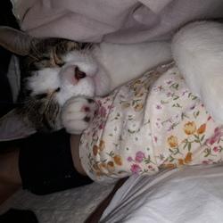 「腕枕」サムネイル1