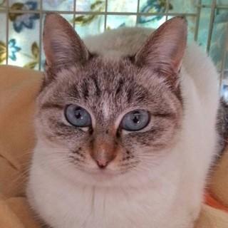美しい青い目のロコちゃん、1才半位