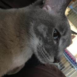 「猫たんぽ」サムネイル3