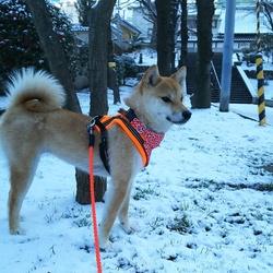 「雪やコンコン」サムネイル3
