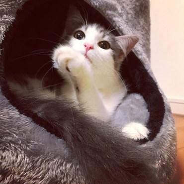 我が家に来てから数時間後、猫型ちぐらへインした所♡
