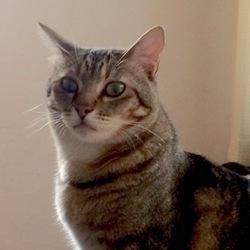 「猫のすまし顔」サムネイル1