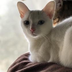 「猫のすまし顔」サムネイル2