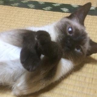 美人猫!とっても人懐っこいです!